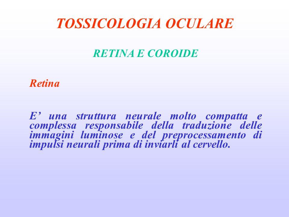 TOSSICOLOGIA OCULARE RETINA E COROIDE Retina E una struttura neurale molto compatta e complessa responsabile della traduzione delle immagini luminose e del preprocessamento di impulsi neurali prima di inviarli al cervello.