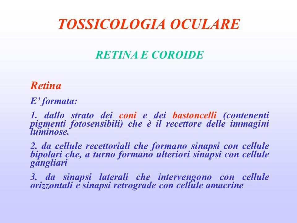 TOSSICOLOGIA OCULARE RETINA E COROIDE Retina E formata: 1.