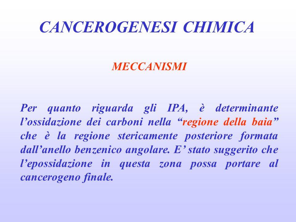 CANCEROGENESI CHIMICA MECCANISMI Per quanto riguarda gli IPA, è determinante lossidazione dei carboni nella regione della baia che è la regione stericamente posteriore formata dallanello benzenico angolare.