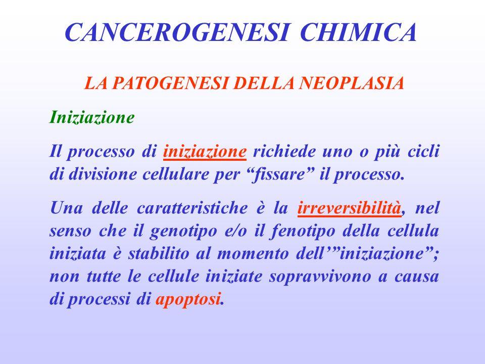 CANCEROGENESI CHIMICA LA PATOGENESI DELLA NEOPLASIA Iniziazione Il processo di iniziazione richiede uno o più cicli di divisione cellulare per fissare il processo.