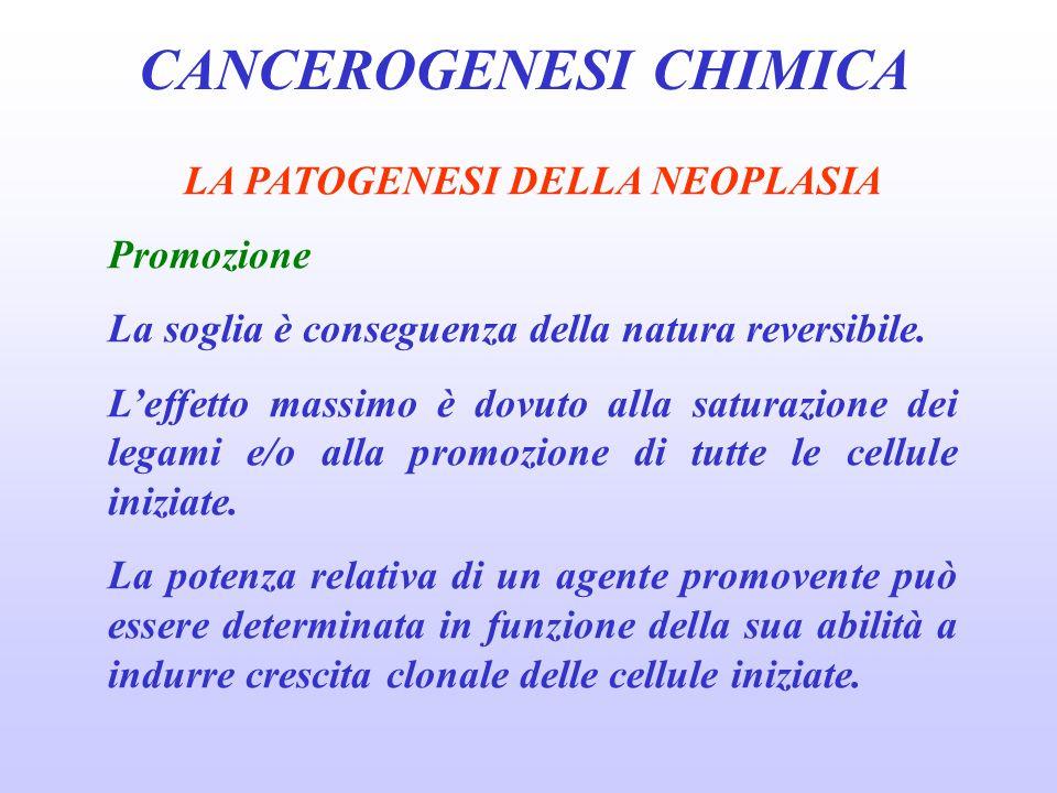CANCEROGENESI CHIMICA LA PATOGENESI DELLA NEOPLASIA Promozione La soglia è conseguenza della natura reversibile.