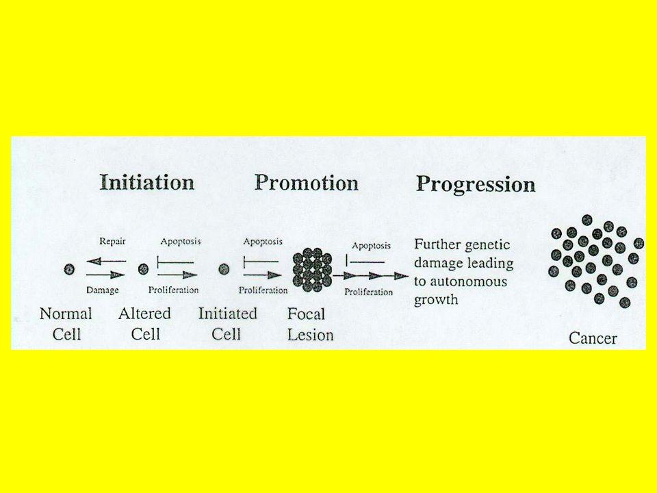 CANCEROGENESI CHIMICA MECCANISMI CELLULARI E MOLECOLARI DEGLI STADI DELLA CANCEROGENESI Iniziazione Sono fondamentali 3 processi: 1.