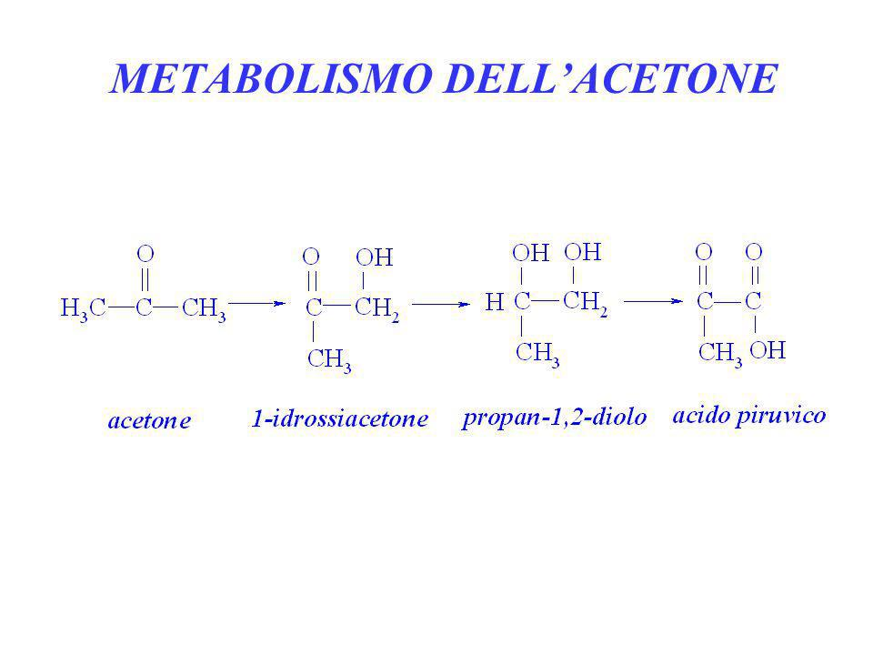 METABOLISMO DELLACETONE