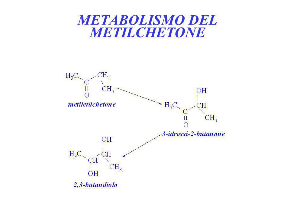 METABOLISMO DEL METILCHETONE