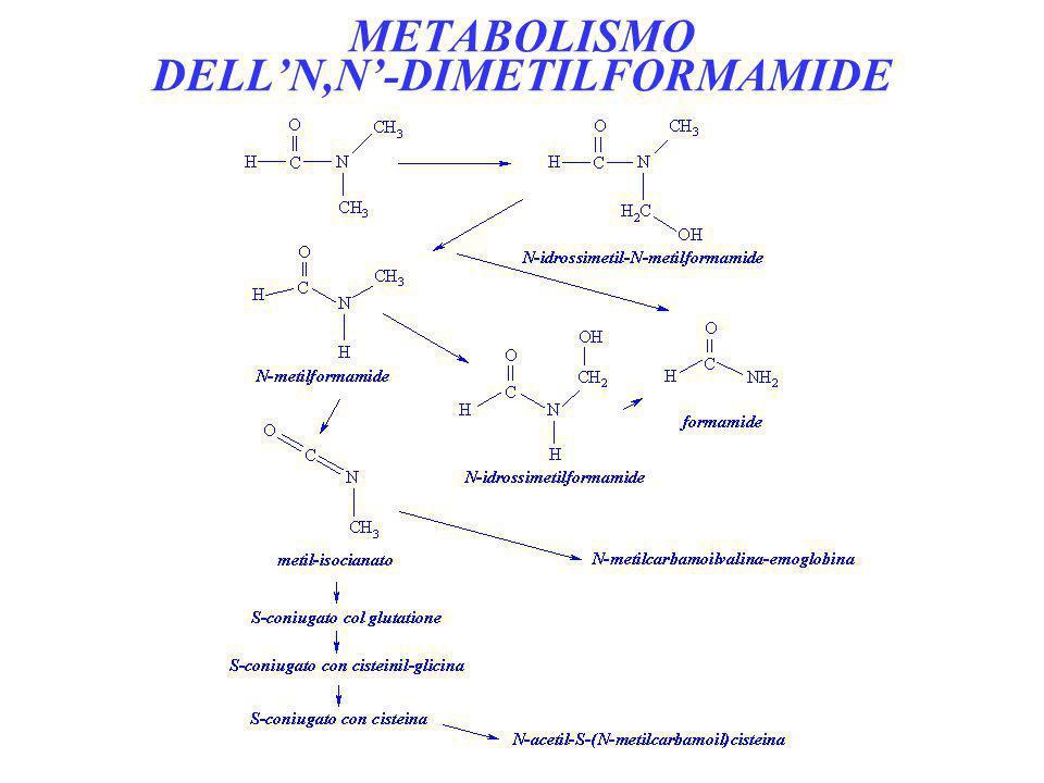 METABOLISMO DELLN,N-DIMETILFORMAMIDE