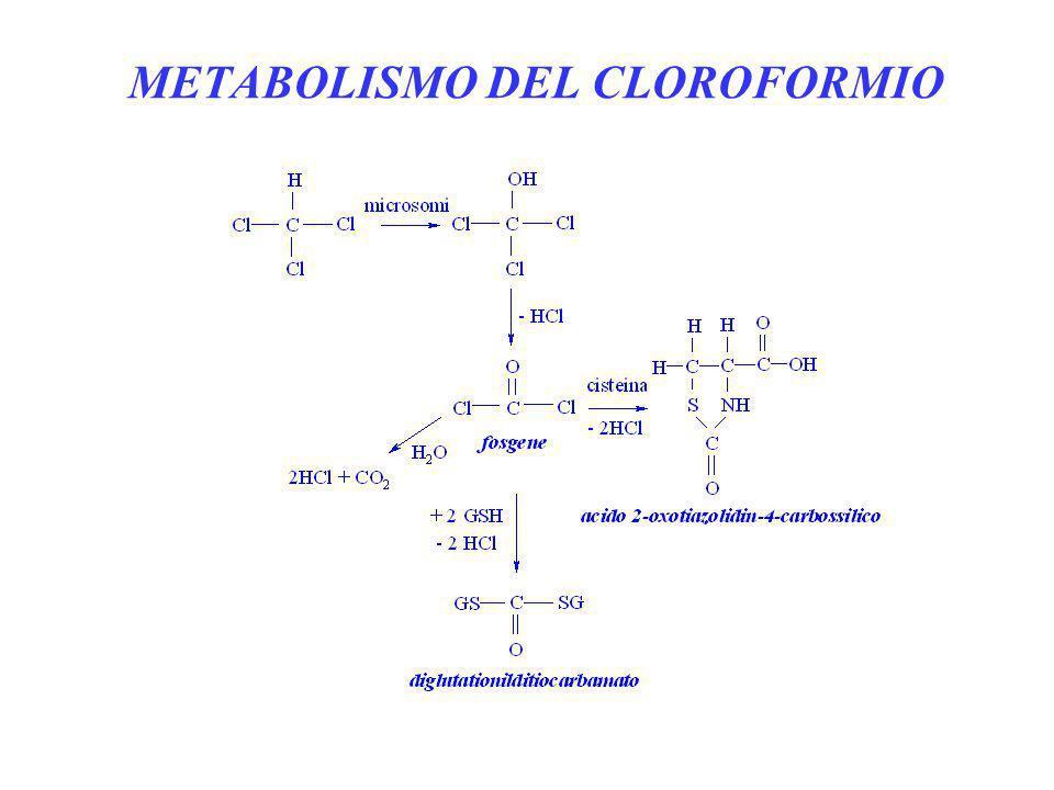 METABOLISMO DEL CLOROFORMIO