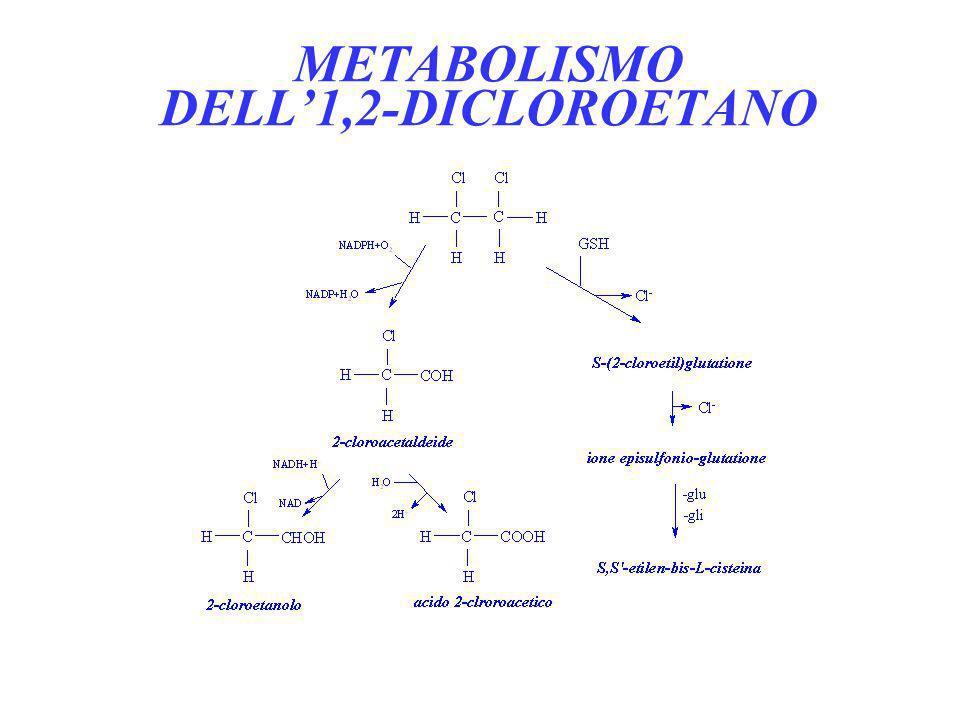 METABOLISMO DELL1,2-DICLOROETANO