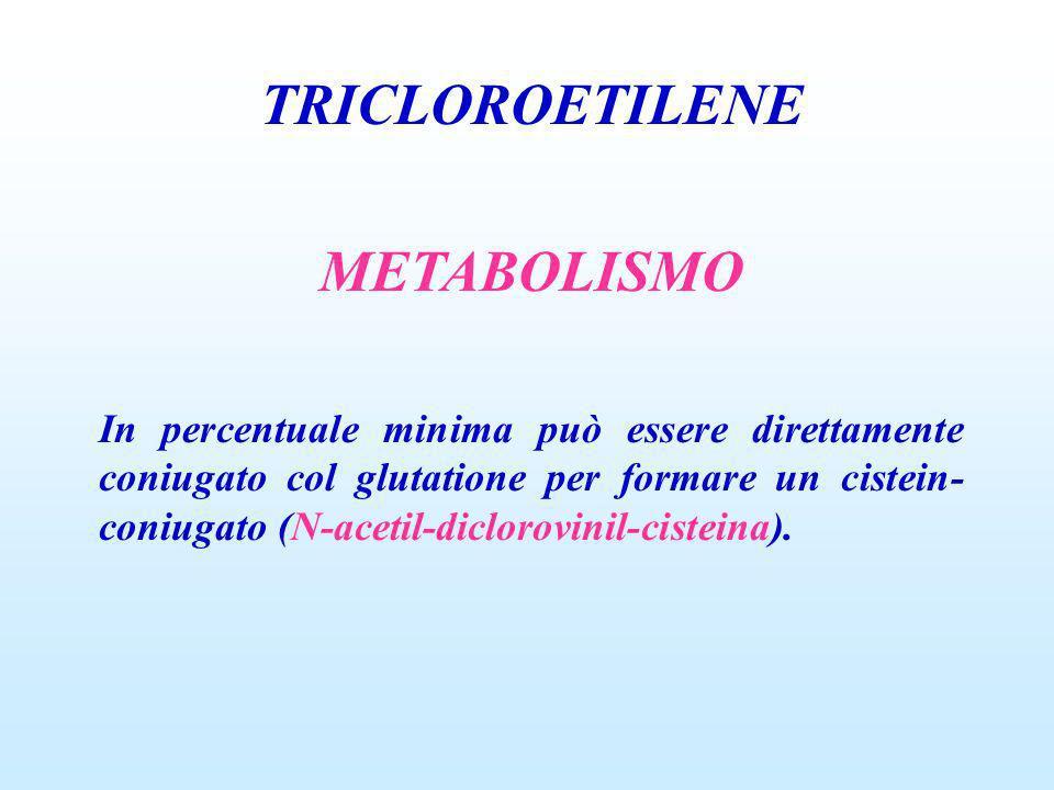 TRICLOROETILENE METABOLISMO In percentuale minima può essere direttamente coniugato col glutatione per formare un cistein- coniugato (N-acetil-dicloro