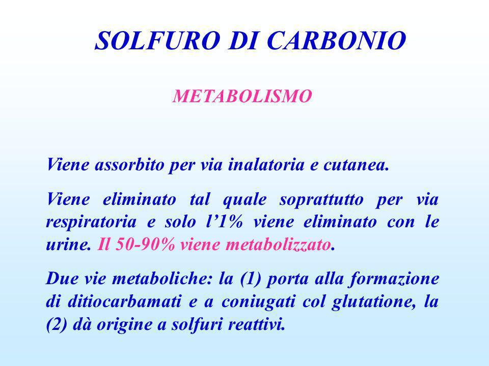 SOLFURO DI CARBONIO METABOLISMO Viene assorbito per via inalatoria e cutanea. Viene eliminato tal quale soprattutto per via respiratoria e solo l1% vi