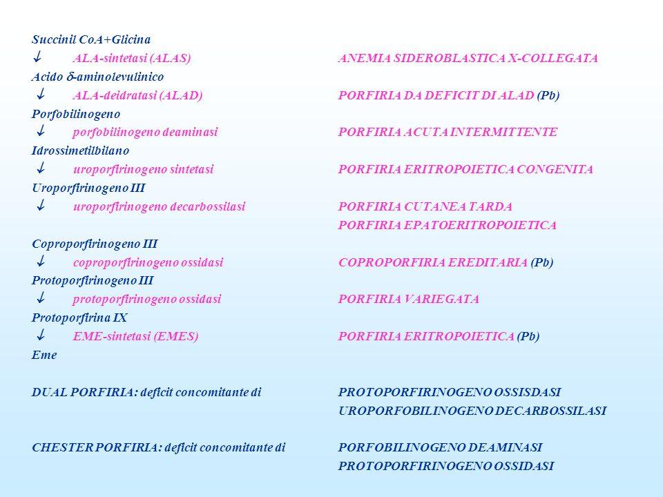 Succinil CoA+Glicina ALA-sintetasi (ALAS)ANEMIA SIDEROBLASTICA X-COLLEGATA Acido -aminolevulinico ALA-deidratasi (ALAD)PORFIRIA DA DEFICIT DI ALAD (Pb