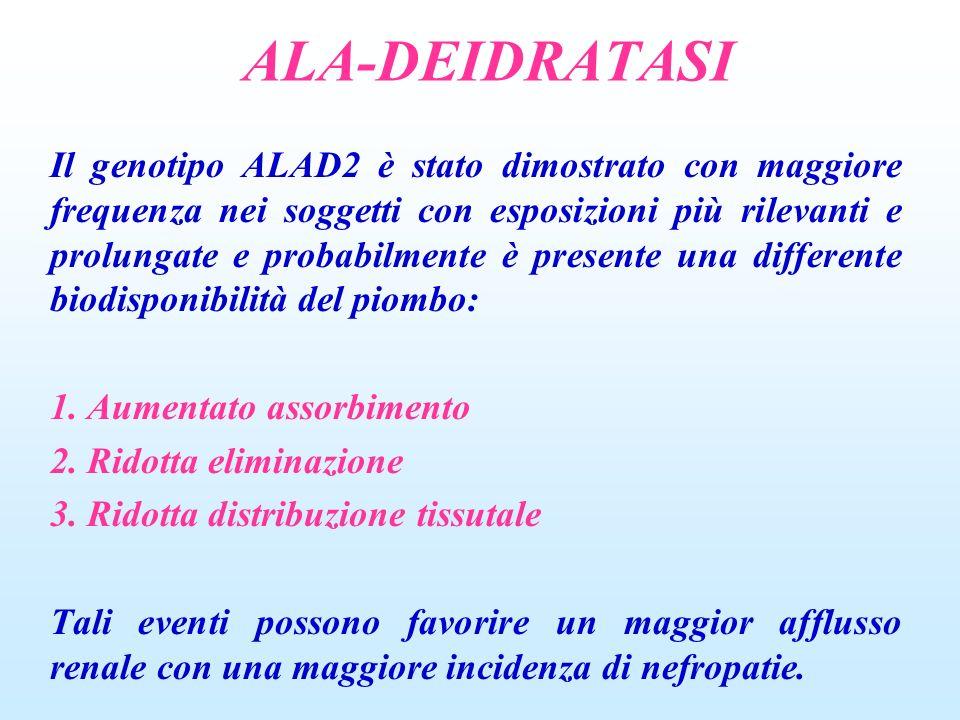 ALA-DEIDRATASI Il genotipo ALAD2 è stato dimostrato con maggiore frequenza nei soggetti con esposizioni più rilevanti e prolungate e probabilmente è p