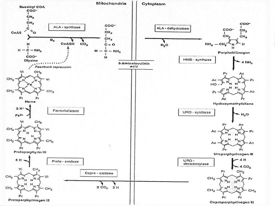 ALA-DEIDRATASI Il genotipo ALAD1 dimostra invece la presenza di una maggiore concentrazione di ALA.