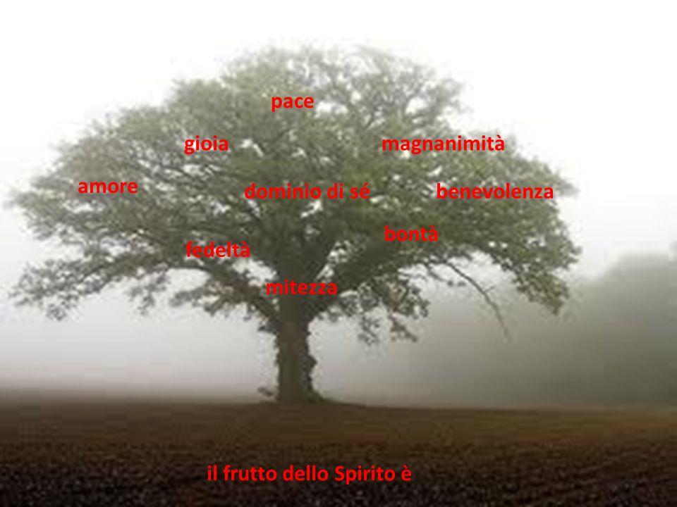 amore gioia pace magnanimità benevolenza bontà fedeltà mitezza dominio di sé il frutto dello Spirito è