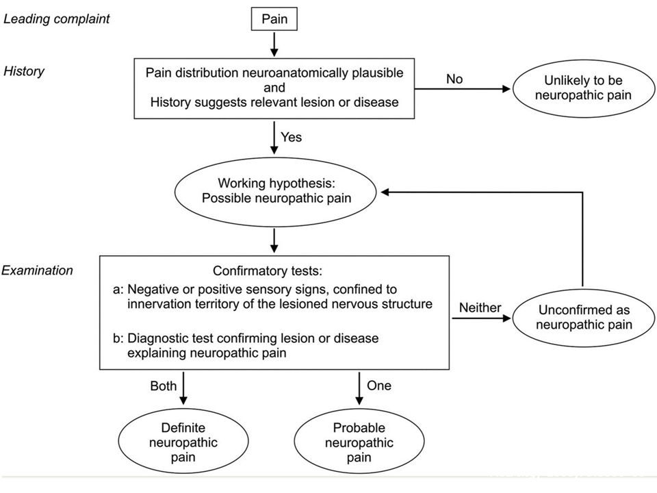 Lalgoritmo diagnostico della NeuPSIG: Pros Definisce chiaramente il DN I fenomeni di sensibilizzazione centrale non sono considerati DN (es.