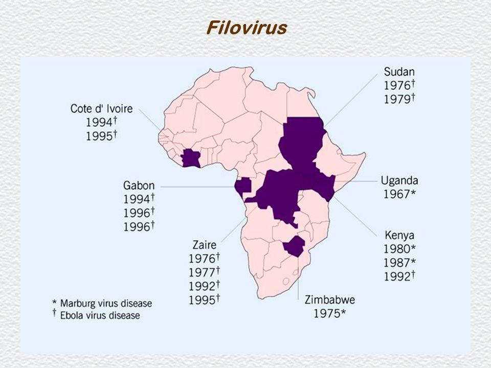 23 Filovirus