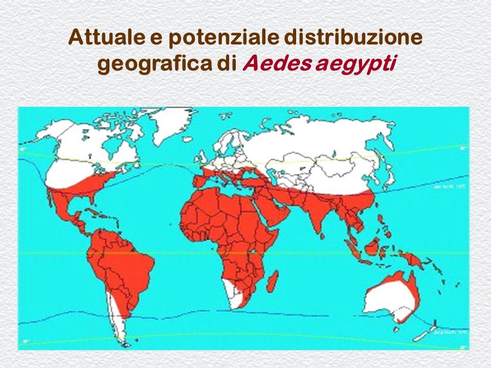 33 Attuale e potenziale distribuzione geografica di Aedes aegypti