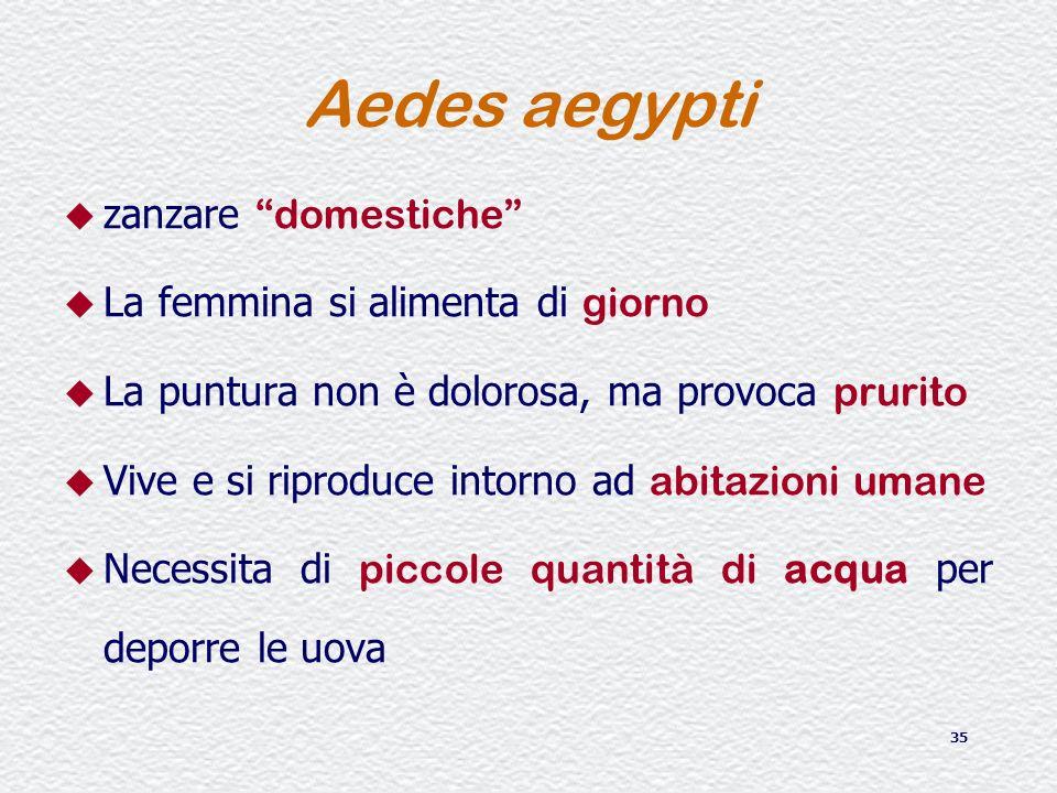 35 Aedes aegypti zanzare domestiche La femmina si alimenta di giorno La puntura non è dolorosa, ma provoca prurito Vive e si riproduce intorno ad abit
