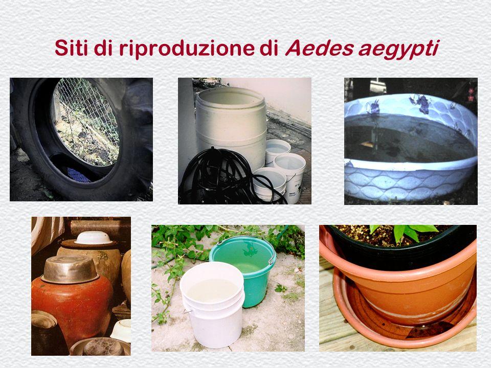 36 Siti di riproduzione di Aedes aegypti