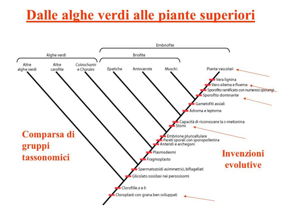 Dalle alghe verdi alle piante superiori Invenzioni evolutive Comparsa di gruppi tassonomici