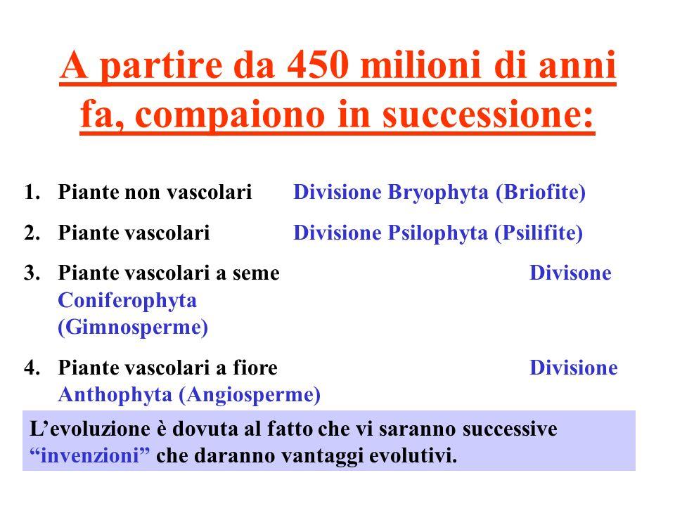 A partire da 450 milioni di anni fa, compaiono in successione: 1.Piante non vascolari Divisione Bryophyta (Briofite) 2.Piante vascolari Divisione Psil