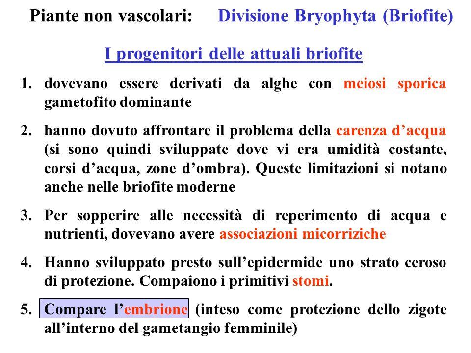 Piante non vascolari:Divisione Bryophyta (Briofite) I progenitori delle attuali briofite 1.dovevano essere derivati da alghe con meiosi sporica gameto