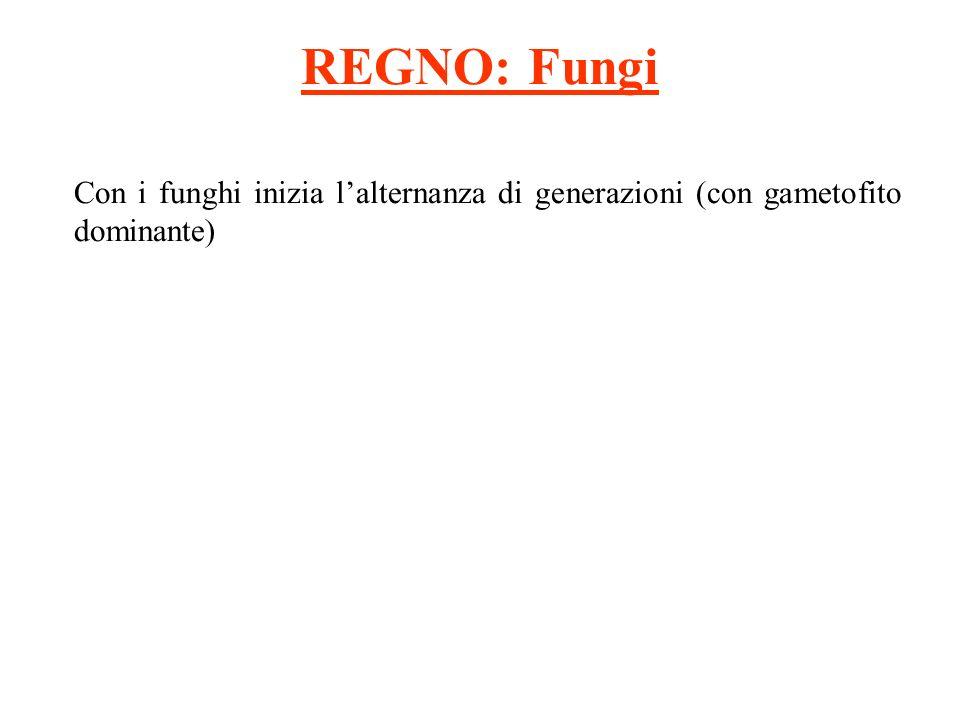 REGNO Protisti ( Alghe brune) ù la laminaria Possiede unalternanza di generazioni eteromorfa.