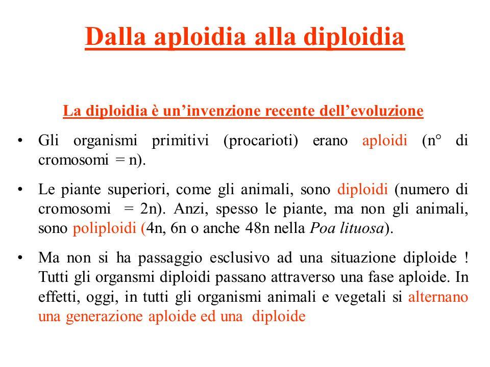 Dalla aploidia alla diploidia La diploidia è uninvenzione recente dellevoluzione Gli organismi primitivi (procarioti) erano aploidi (n° di cromosomi = n).