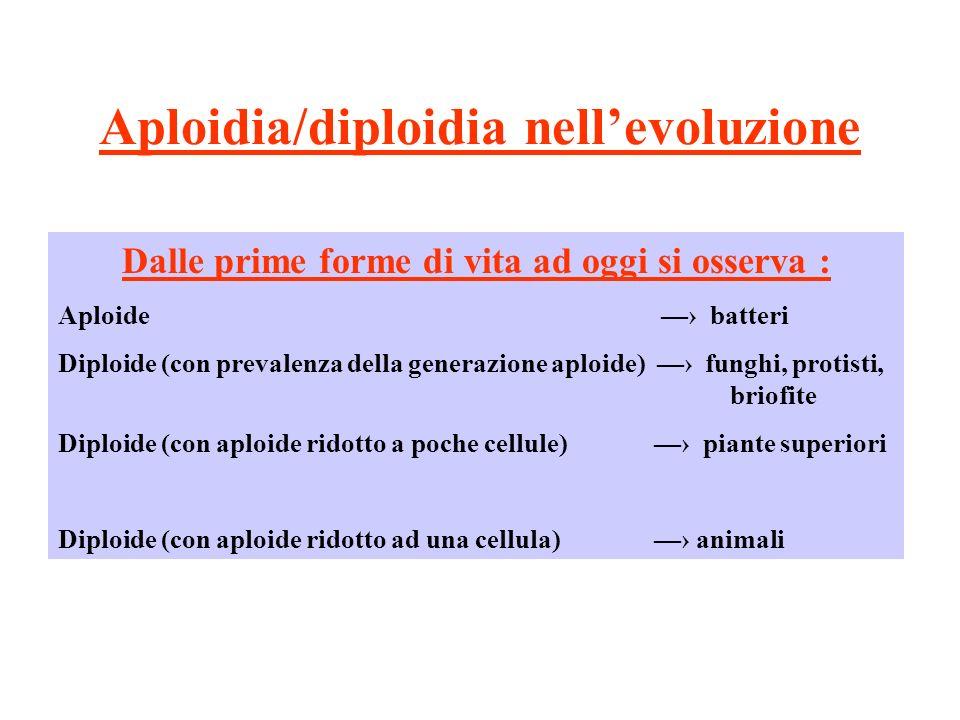Aploidia/diploidia nellevoluzione Dalle prime forme di vita ad oggi si osserva : Aploide batteri Diploide (con prevalenza della generazione aploide) f