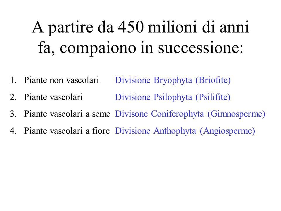 A partire da 450 milioni di anni fa, compaiono in successione: 1.Piante non vascolariDivisione Bryophyta (Briofite) 2.Piante vascolariDivisione Psilophyta (Psilifite) 3.Piante vascolari a semeDivisone Coniferophyta (Gimnosperme) 4.Piante vascolari a fioreDivisione Anthophyta (Angiosperme)