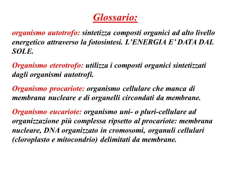 Glossario: organismo autotrofo: sintetizza composti organici ad alto livello energetico attraverso la fotosintesi. LENERGIA E DATA DAL SOLE. Organismo