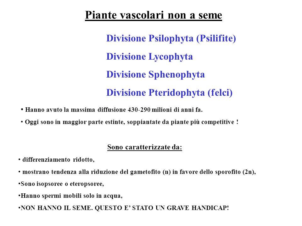 Piante vascolari non a seme Divisione Psilophyta (Psilifite) Divisione Lycophyta Divisione Sphenophyta Divisione Pteridophyta (felci) Hanno avuto la m