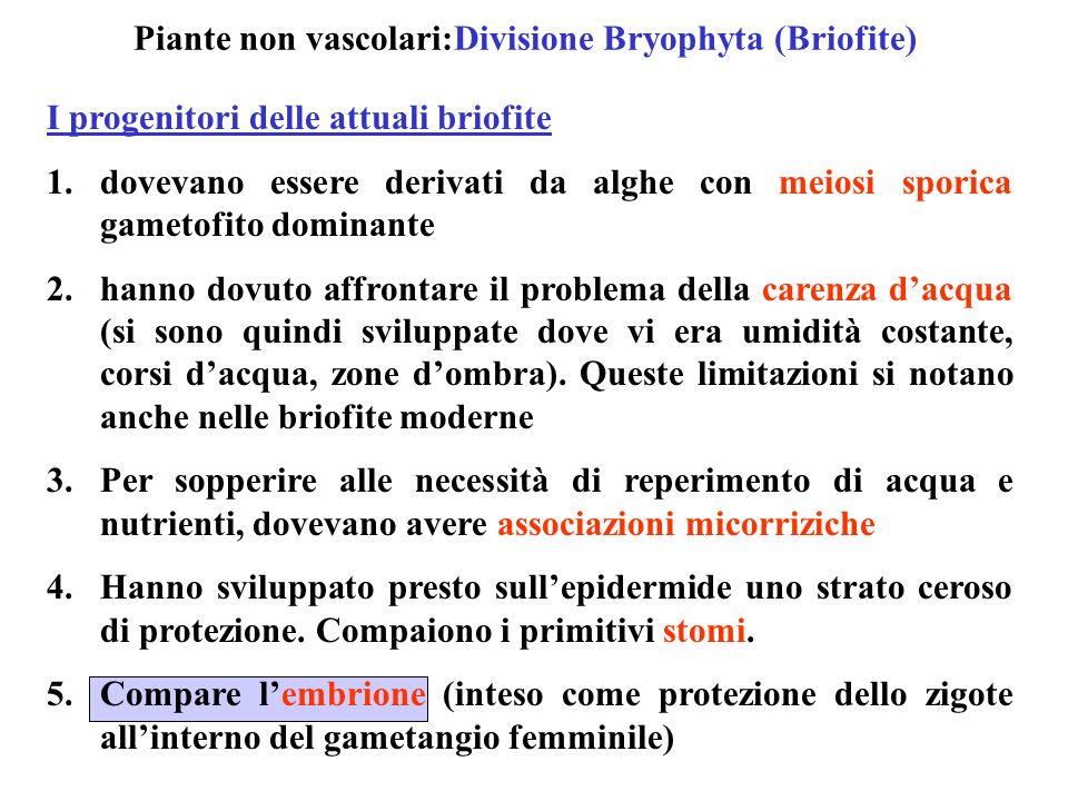 Le 16.000 briofite oggi viventi 1.Sono piante piccole (2-20 cm in altezza) 2.Non hanno foglie, tessuti conduttori, radici (solo in qualche caso hanno idroidi, tessuti conduttori promordiali) 3.Vivono in ambienti umidi 4.Sono abbondanti al Nord, nelle zone fredde Caratteristiche generali Alternanza di generazioni 1.Lo sporofito è sempre troficamente dipendente dal gametofito 2.