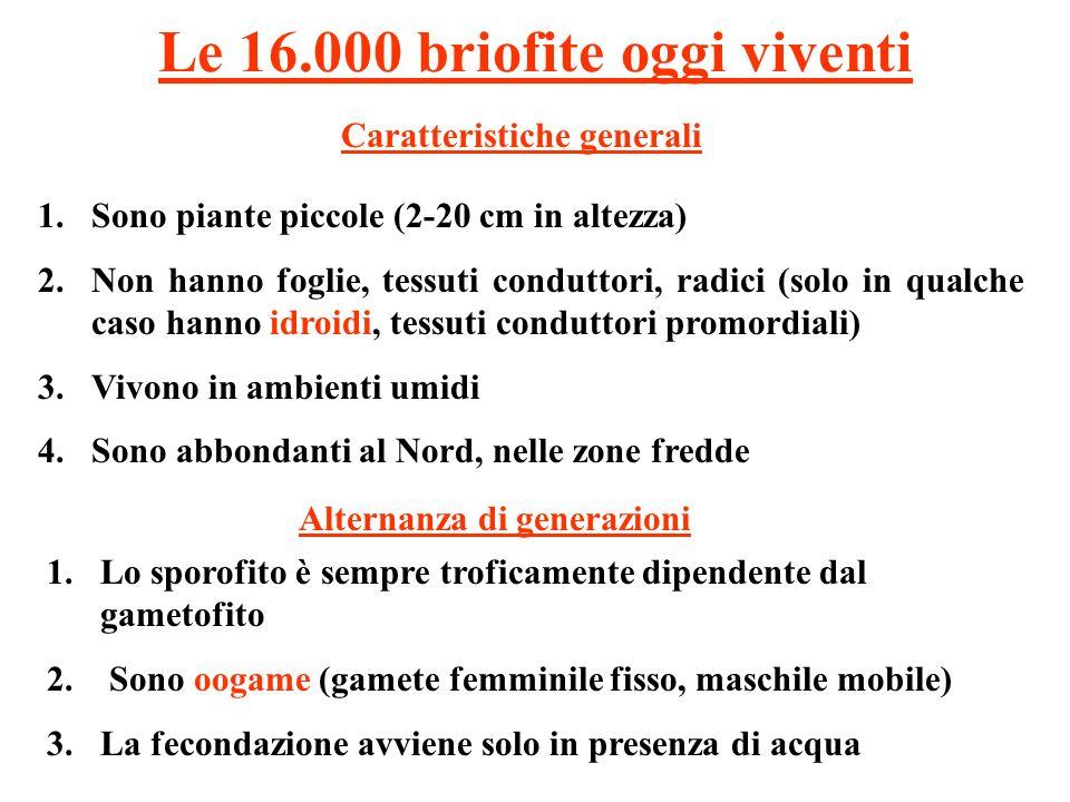 Le 16.000 briofite oggi viventi 1.Sono piante piccole (2-20 cm in altezza) 2.Non hanno foglie, tessuti conduttori, radici (solo in qualche caso hanno