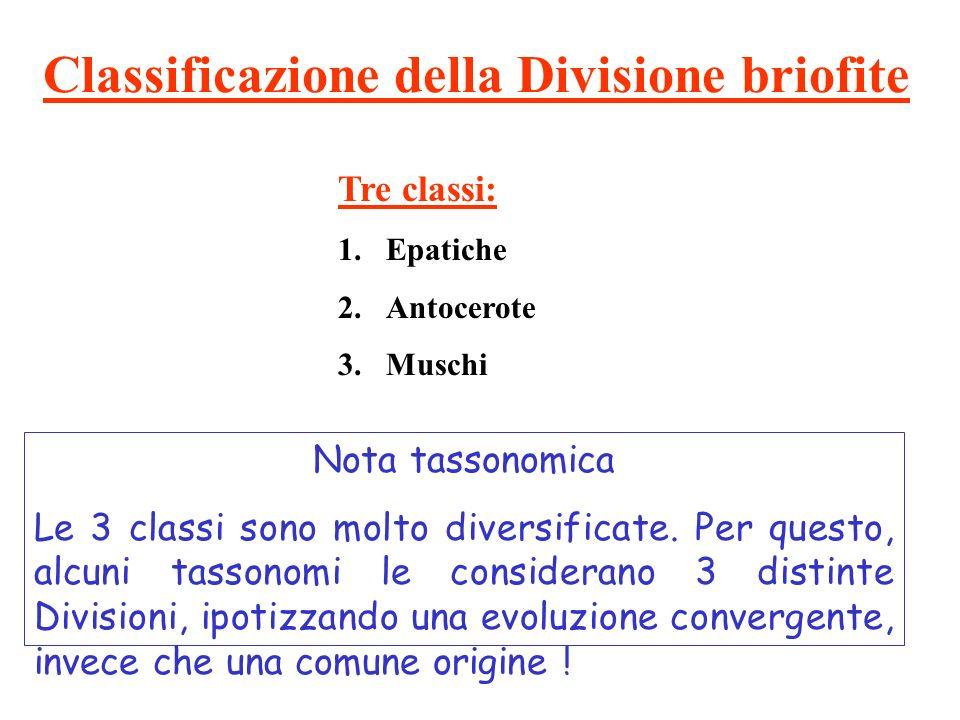 Classificazione della Divisione briofite Tre classi: 1.Epatiche 2.Antocerote 3.Muschi Nota tassonomica Le 3 classi sono molto diversificate. Per quest
