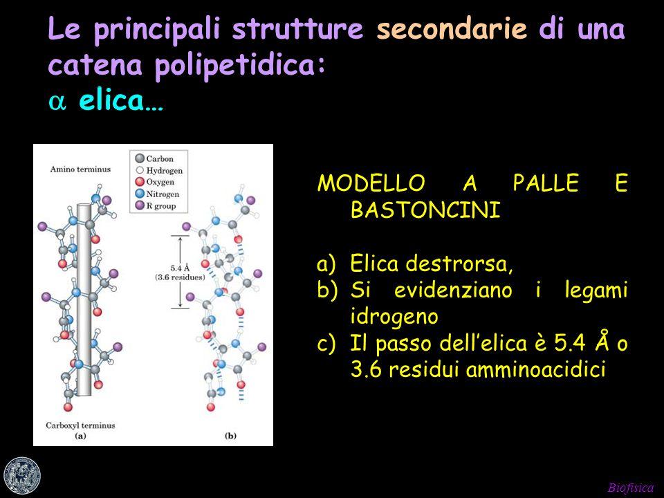 Biofisica Le principali strutture secondarie di una catena polipetidica: elica… MODELLO A PALLE E BASTONCINI a)Elica destrorsa, b)Si evidenziano i leg