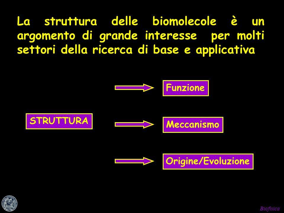 Biofisica La struttura delle biomolecole è un argomento di grande interesse per molti settori della ricerca di base e applicativa STRUTTURA FunzioneMe