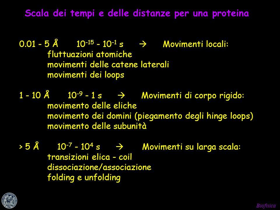 Biofisica Scala dei tempi e delle distanze per una proteina 0.01 - 5 Å 10 -15 - 10 -1 s Movimenti locali: fluttuazioni atomiche movimenti delle catene