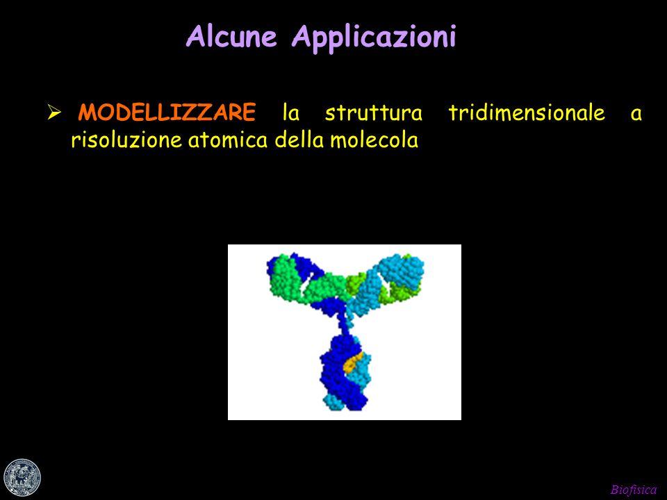 Biofisica Alcune Applicazioni MODELLIZZARE la struttura tridimensionale a risoluzione atomica della molecola