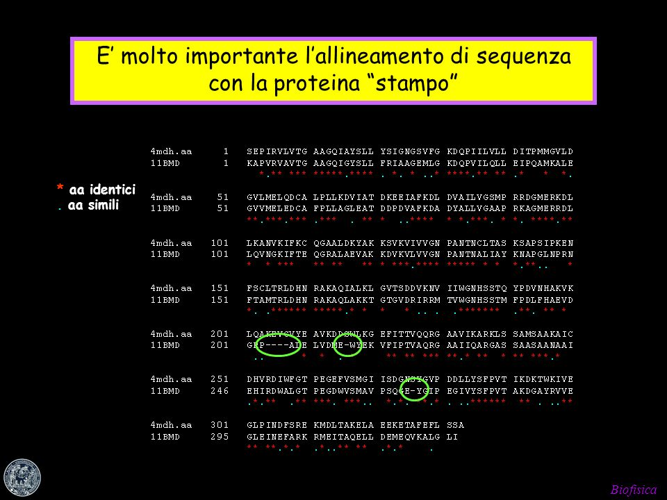 Biofisica E molto importante lallineamento di sequenza con la proteina stampo * aa identici. aa simili