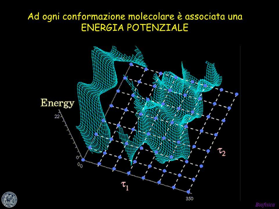 Biofisica Ad ogni conformazione molecolare è associata una ENERGIA POTENZIALE