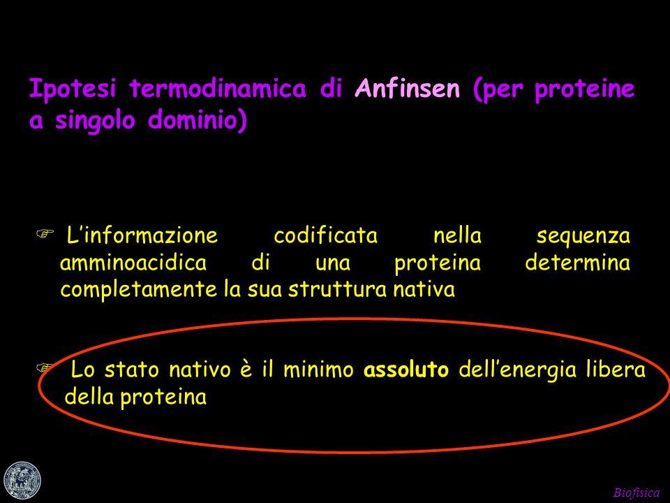 Biofisica Ipotesi termodinamica di Anfinsen (per proteine a singolo dominio) Linformazione codificata nella sequenza amminoacidica di una proteina det