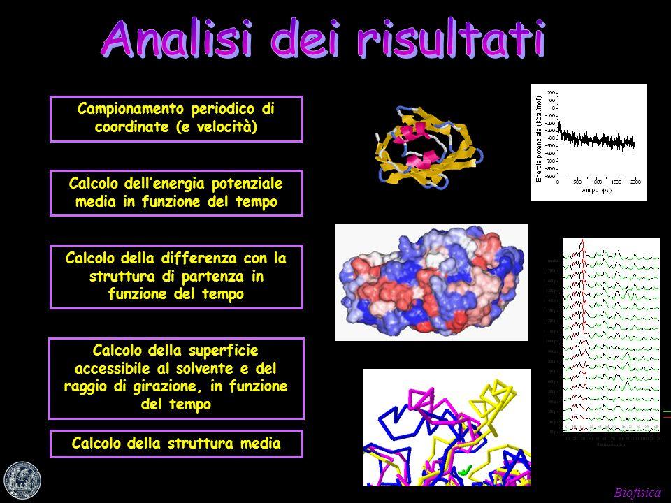 Biofisica Analisi dei risultati Campionamento periodico di coordinate (e velocità) Calcolo dellenergia potenziale media in funzione del tempo Calcolo