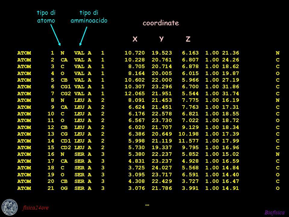 Biofisica fisica24ore Sistema allo zero assoluto Temperatura di simulazione desiderata Riscaldamento lento alla temperatura di simulazioneRiequilibrazione dellenergia tra gli atomiDistribuzione iniziale di velocità v i Energia cinetica totale del sistema
