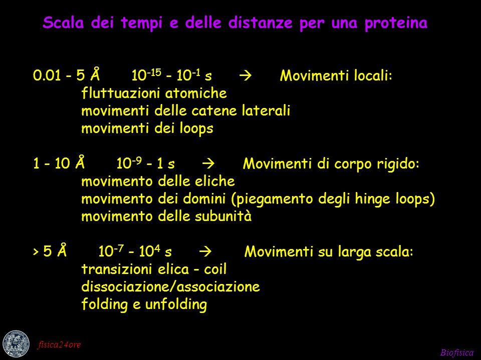 Biofisica fisica24ore La traiettoria è generata da integrazioni simultanee dell equazione del moto di Newton F i = m i a i per tutti gli atomi del sistema molecolare Tenendo presente che la forza si può esprimere come gradiente dell energia potenziale: F i = - dV/dr i si combinano le due equazioni e si ottiene: - dV/dr i = m i d 2 r i /dt 2 che collega la derivata dell energia potenziale alle variazioni di posizione in funzione del tempo ed è quella che viene integrata.
