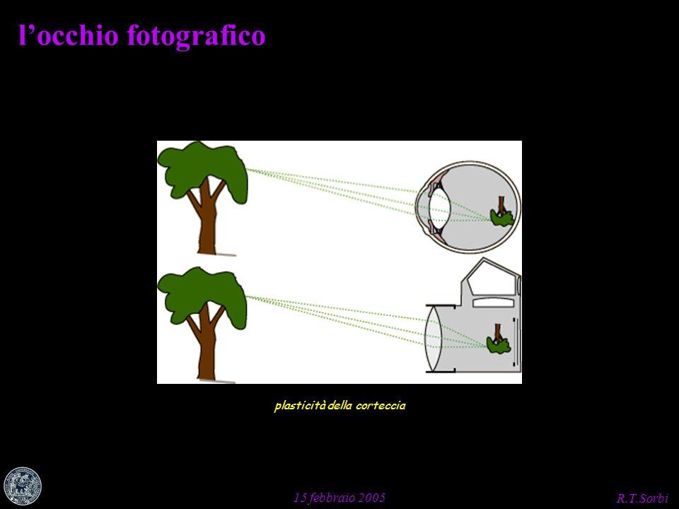 R.T.Sorbi 15 febbraio 2005 locchio fotografico plasticità della corteccia