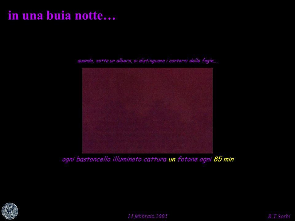 R.T.Sorbi 15 febbraio 2005 in una buia notte… quando, sotto un albero, si distinguono i contorni delle fogle…. ogni bastoncello illuminato cattura un