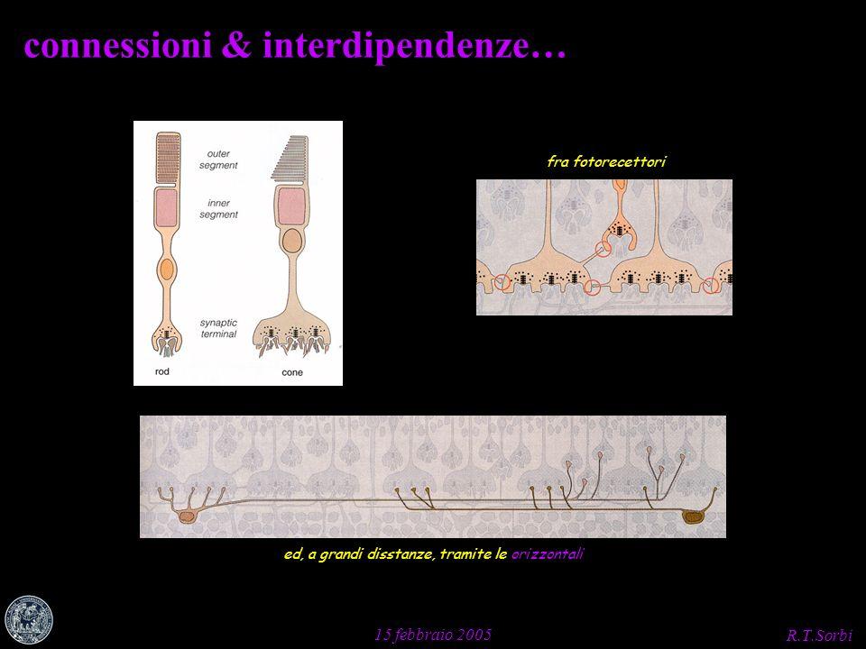 R.T.Sorbi 15 febbraio 2005 connessioni & interdipendenze… fra fotorecettori ed, a grandi disstanze, tramite le orizzontali