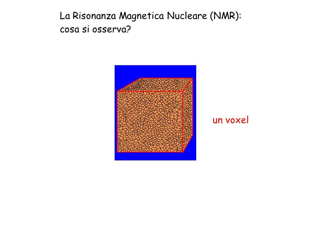 La Risonanza Magnetica Nucleare (NMR): cosa si osserva? un voxel