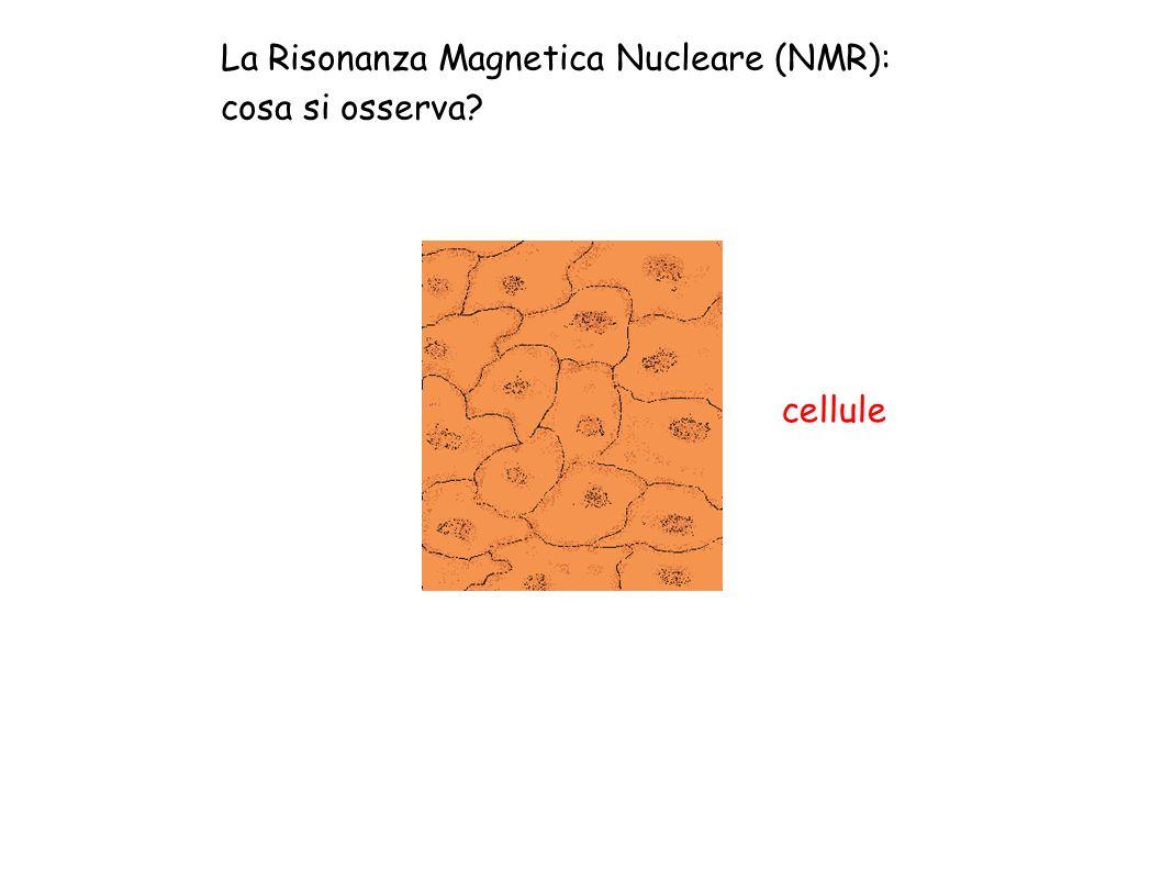 La Risonanza Magnetica Nucleare (NMR): cosa si osserva? cellule
