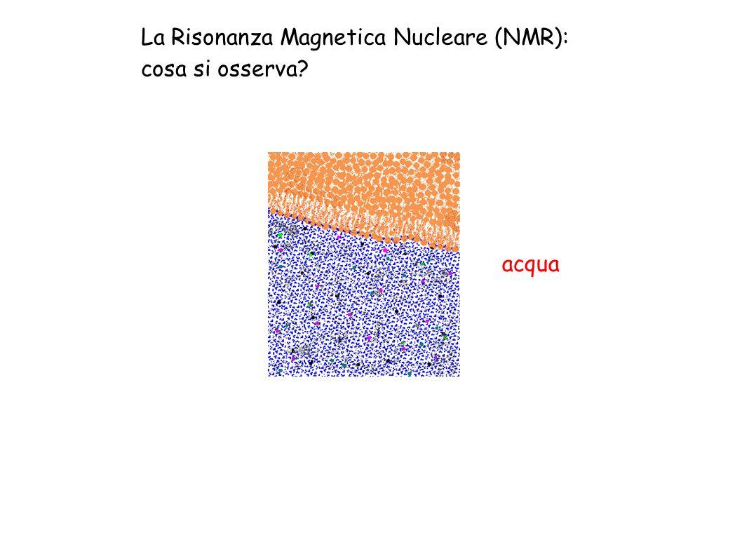 La Risonanza Magnetica Nucleare (NMR): cosa si osserva? acqua